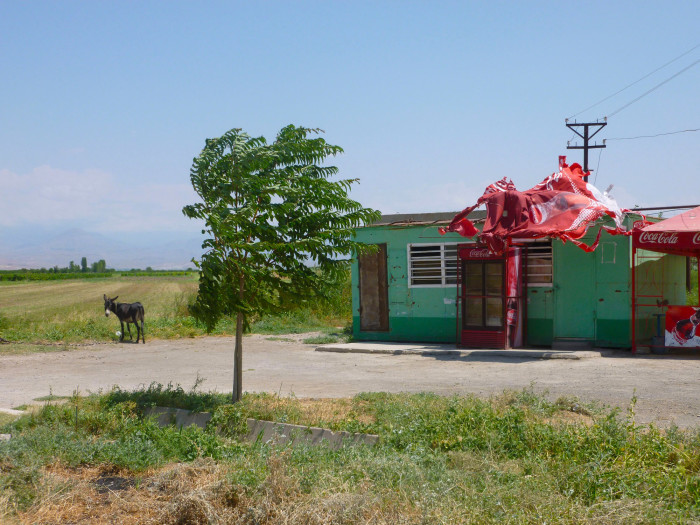 A donkey and defunct watering hole