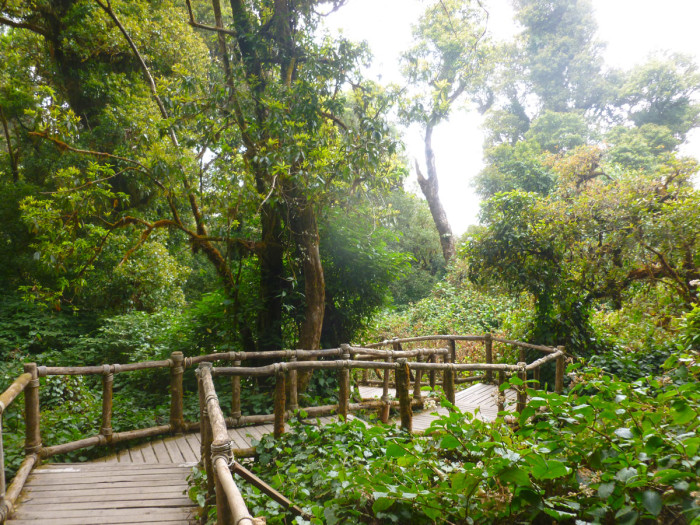 The beautiful high jungle/rainforest at the top of Doi Inthanon.