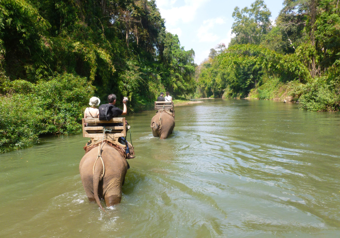 I rode an elephant down a river near Chiang Mai