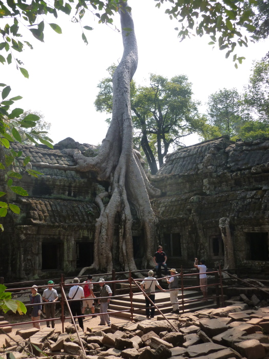 One of the crazy cool trees at Ta Prohm