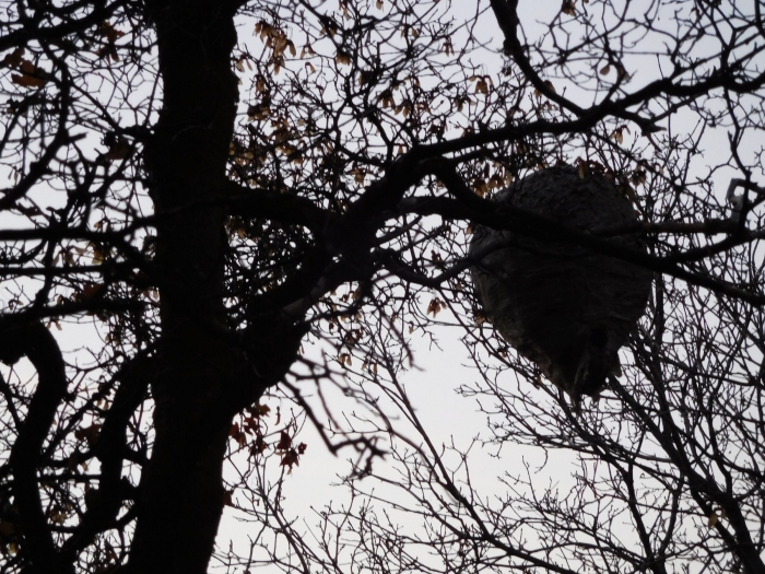 A big beehive near the trailhead
